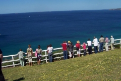 Dolphin spotting at Strzelecki Lookout - Newcastle - Sun